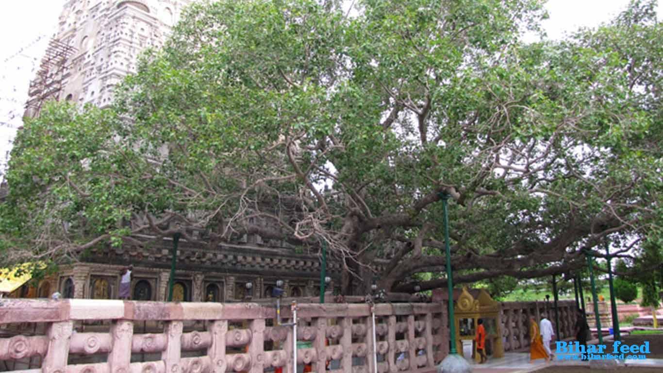 maha bodhi temple bodh gaya